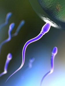 Вероятность зачатия
