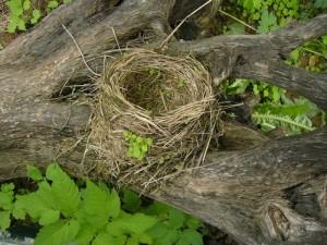 Опустевшего гнезда феномен