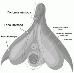 Структура и фото клитора